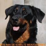 CHCS Ana de Subeltz Beaucerones